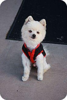 Gilbert Dog Rescue