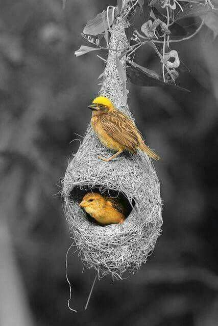 Ingenious nest.