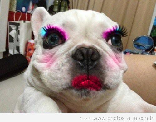 image drole bulldog maquillage