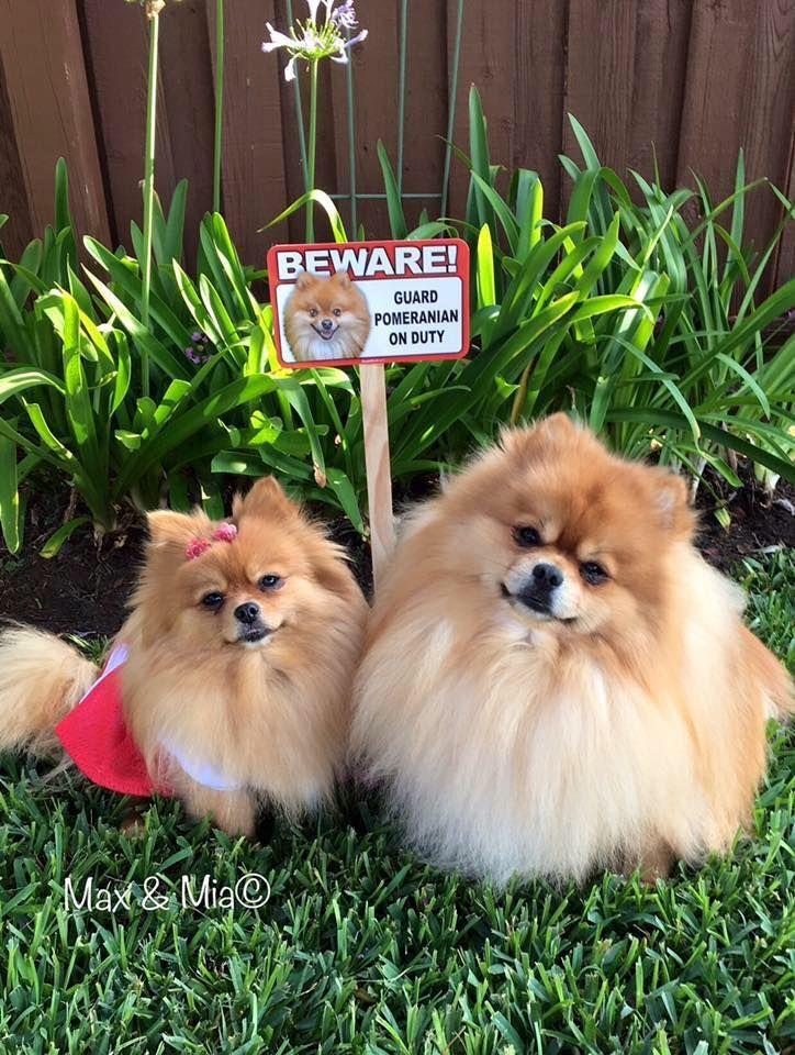 Toy Dog Breeds List : Ideas about toy dog breeds on pinterest list