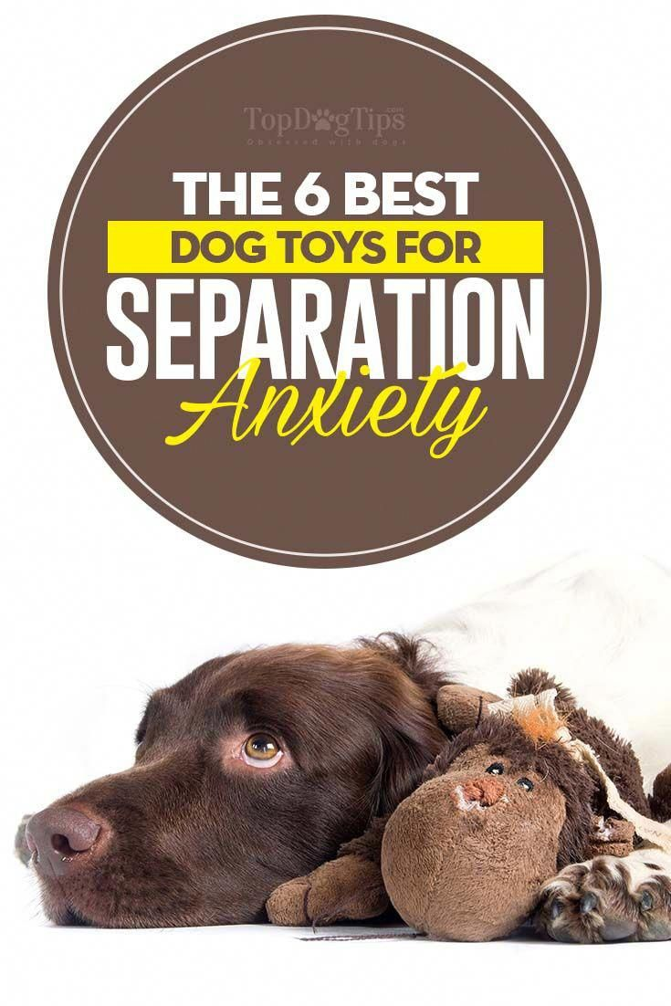 You can't blame your pet pup for being anxious in his new