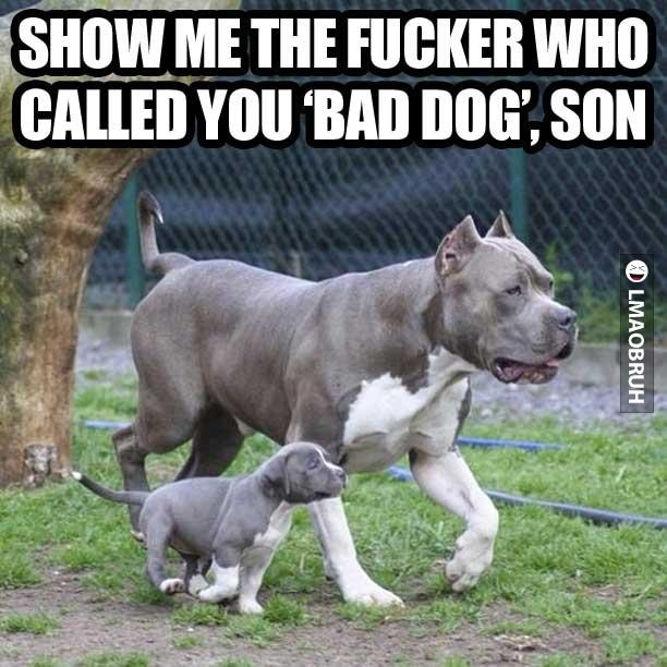 Show Me Pictures Of Small Beautiful Bathrooms: Funny Quotes About My Pitbull. QuotesGram