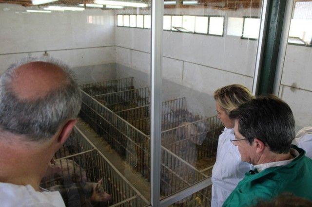 La Comunidad destinará 55.000 euros para potenciar la creación del Centro Regional de Inseminación Artificial de ganado porcino