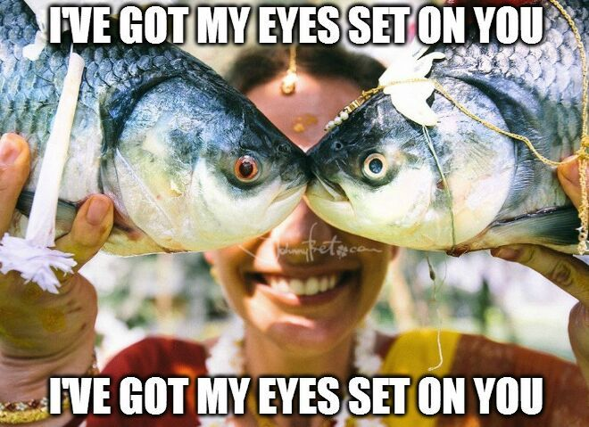 https://it.johnnybet.com/codice-promozione-goldbet#picture?id=8241 #fish #eyes #funny #memes #follow