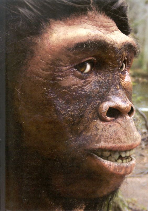 homo georgicus. Oldest hominid found outside of Africa at  1.8MYA. Found in Georgia, near the border with Armenia