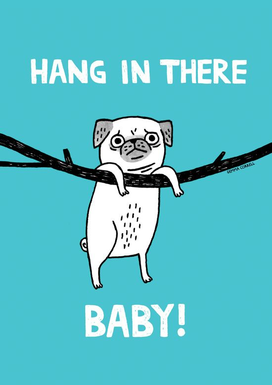 Hang In There, (Pug) Baby (For Sale)