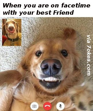 When You Are On Facetime With Your Best Friend - - 7JOKES - The Fun Strarts Here, Extremely funny posts, funny pics, funny designs, funniest videos, pranks.