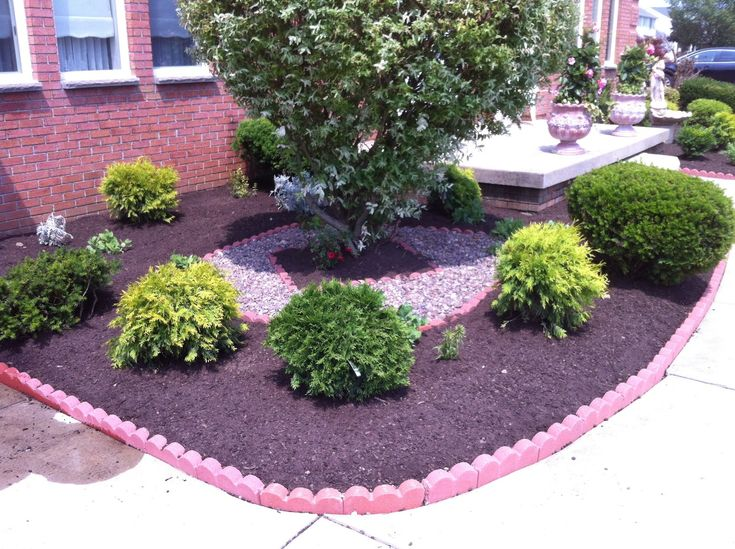 23 best new landscaping plants images on pinterest for Small bushy trees