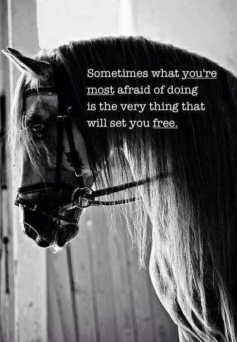 Best 25+ Horse quotes ideas on Pinterest | Horse riding ...