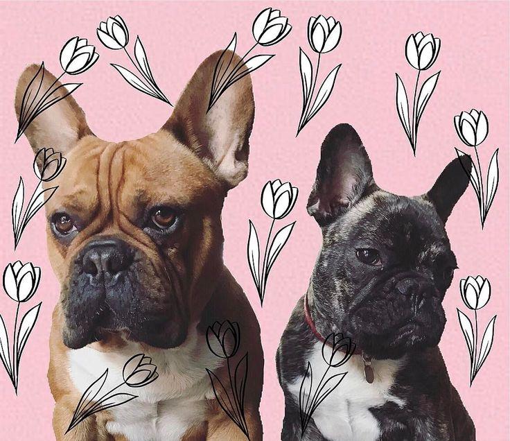 Chłopaki życzą wszystkim Kobietom wszystkiego Najlepszego ❤puppy #dog #instadog #instapuppy#polishdog #frenchie #frenchbulldog #bulldog #sweet #mylove #cute #poland #pies #szczeniak #buldog #buldogfrancuski #vsco #vscocam #frenchielove #frenchbulldoglovers #frenchiesofinstagram #frenchy #instafrenchie #frenchiesy - bo.pies