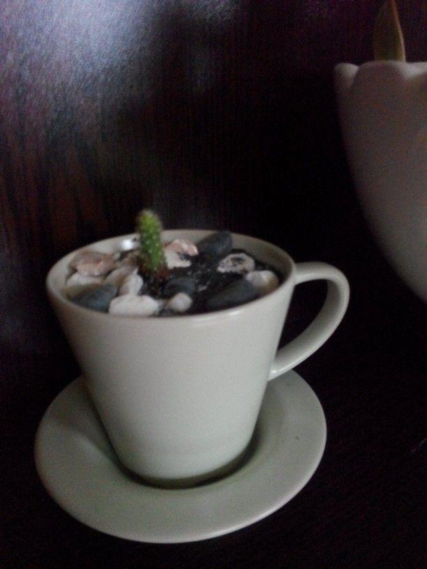 Fincan icinde kaktus