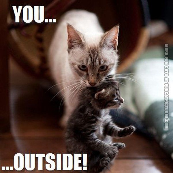 Funny cats and kittens pictures