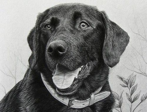 how to draw dog fur with pencil