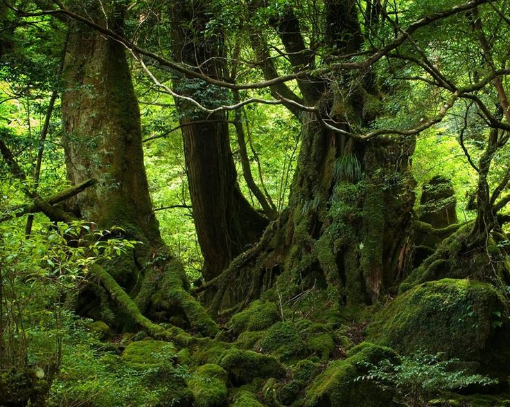 1000 images about inspiration on pinterest - Houses woods nature integrated ...