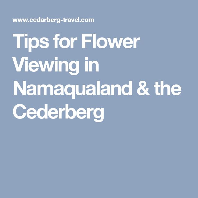 Tips for Flower Viewing in Namaqualand & the Cederberg