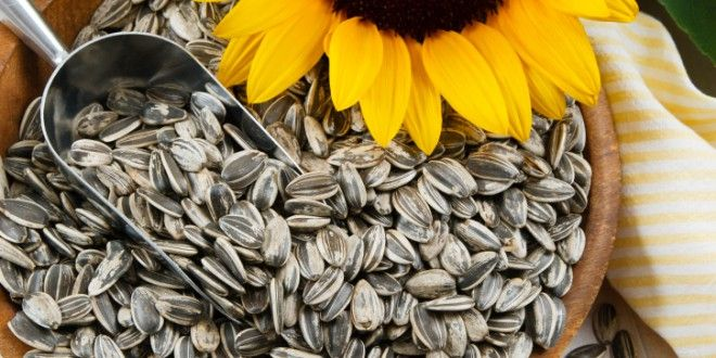 Different Types of Bird Seeds For Different Birds-Sunflower seeds