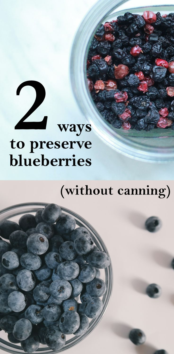Freezing and drying blueberries for a bit of summer all year long | Preserving berries | Freezing blueberries | Drying blueberries