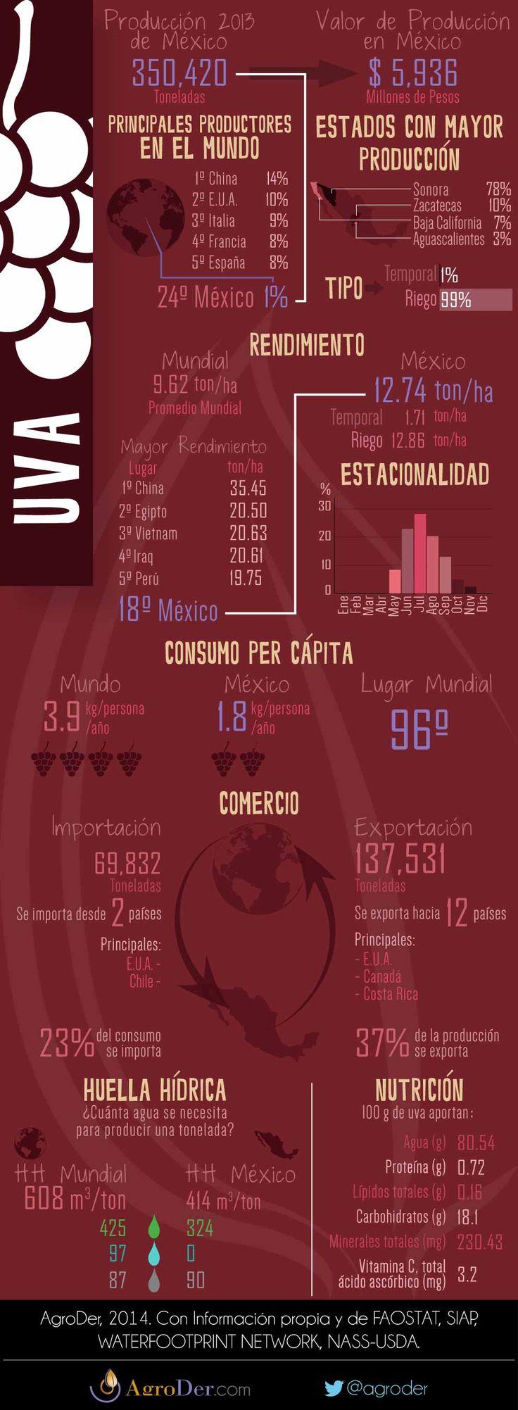Infografía - Uva en México, 2013.