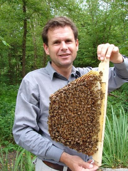 Why is honey the proper food for honey bees? Don't feed HF Corn Syrup or Sugar, bees eat HONEY!