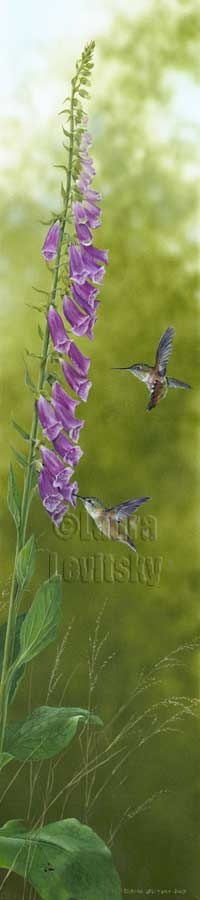 Garden Glitters - Rufous Hummingbirds and Foxgloves  www.levitskyart.com
