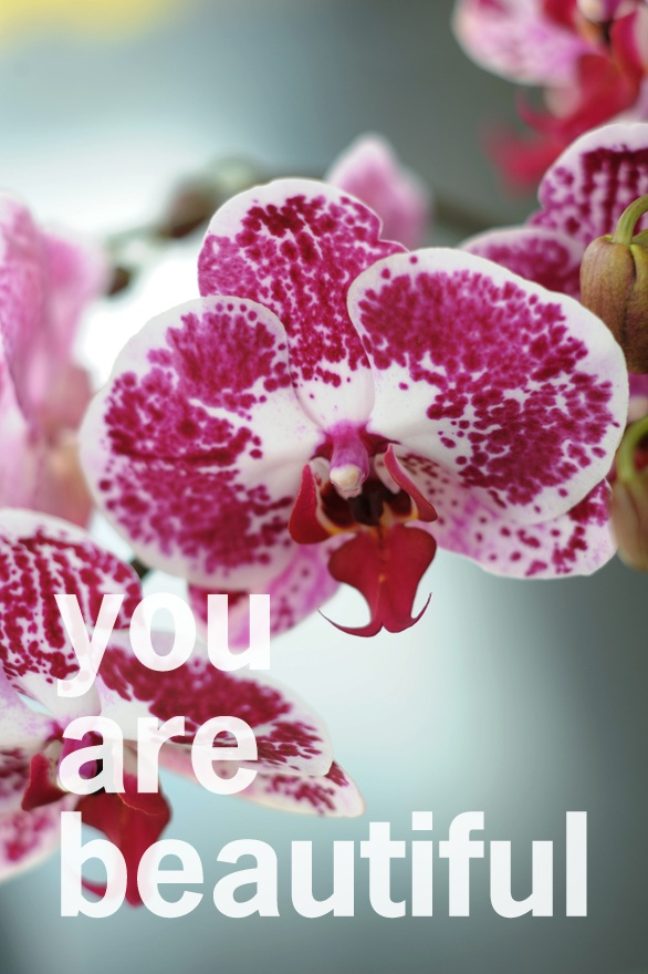 how to keep orchids from dying