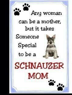 Schnauzer mom! I love my sweet little girl! Best dog ever!!