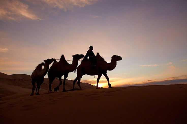 Mongolie   #wild #mongolia #desert #trip #camel #sunset #animal #sun #night Copyright © Andrew Newey. All Rights Reserved.