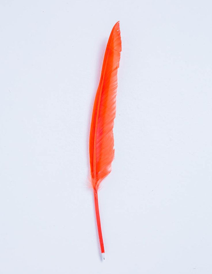 Feather pen for Stationery