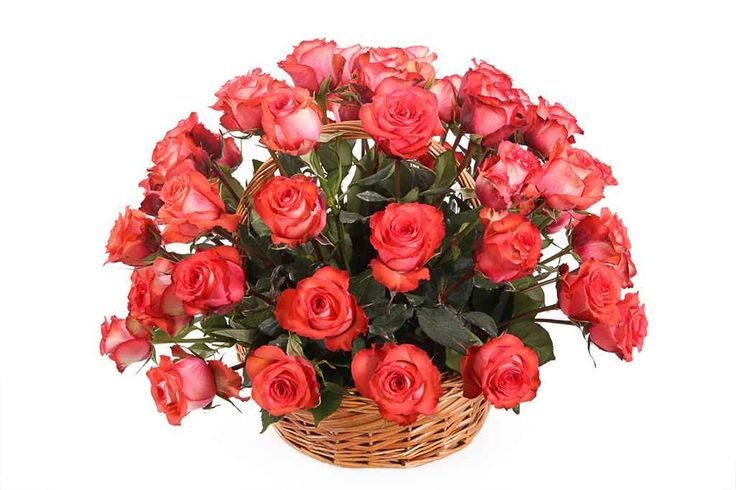 прекрасный Букет 51 роза Игуана в корзине  #Букеты #Хитыпродаж,Букет51розаИгуанавкорзине