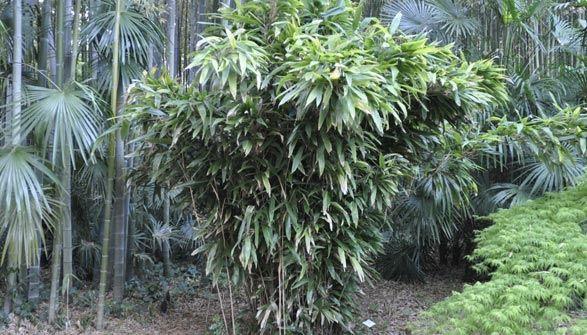 les 20 meilleures id 233 es de la cat 233 gorie jardin de bambous