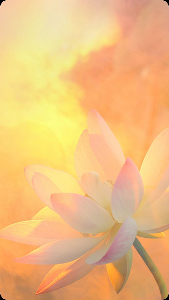 best Flowers images on Pinterest Lotus flowers Nature and
