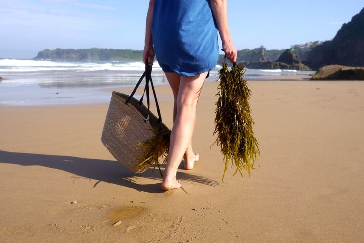 Foraging Seaweed for Home & Garden Use