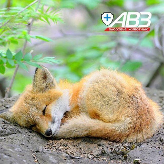Лисичка тоже решила вздремнуть 😊