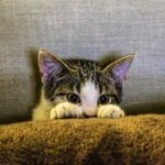 random facts about cats
