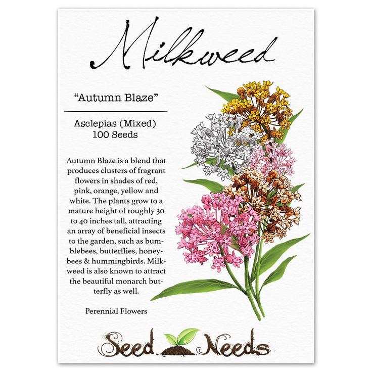 how to grow milkweed seeds indoors