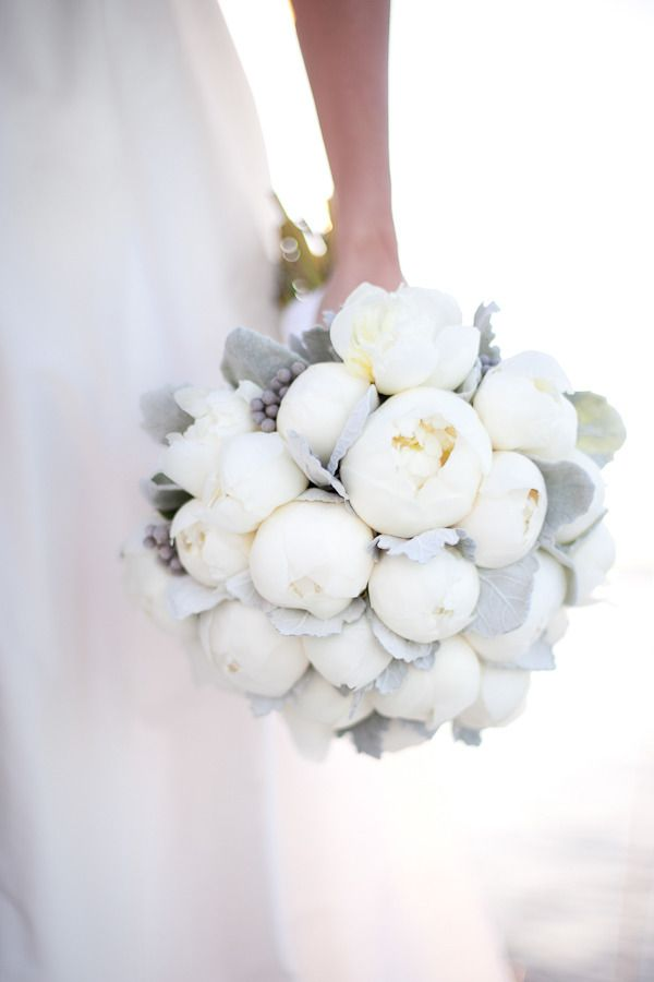 White peony buds and silver leaves make for a splendid winter wedding bouquet.