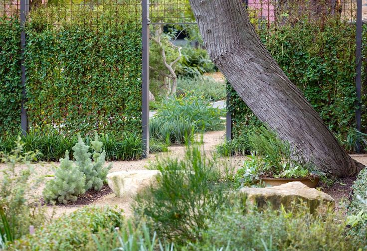 1320 best australian native gardens images on pinterest