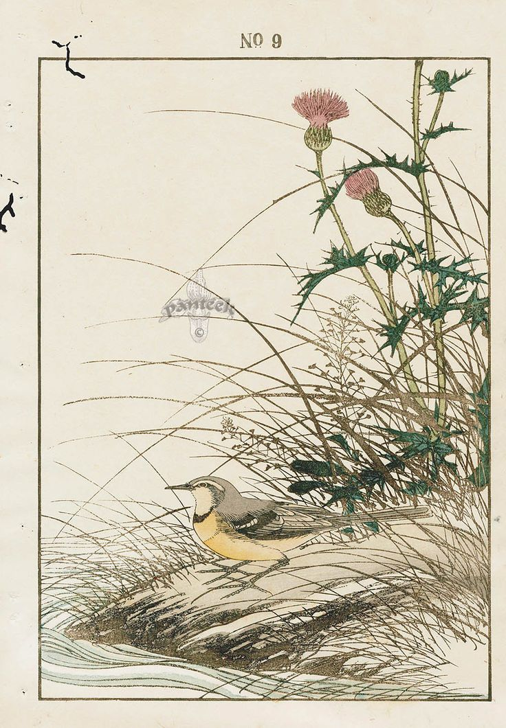 """""""Grey Wagtail & Thistle"""" from 1891 Keinen Imao Woodblock 1st Edition Birds & Flowers Japan"""