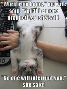 20 lustige Tier Meme, die Sie Lol machen