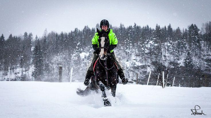 Running Horse in the Snow by Kasper M. de Thurah on 500px #horse #snow #running #norway #winter