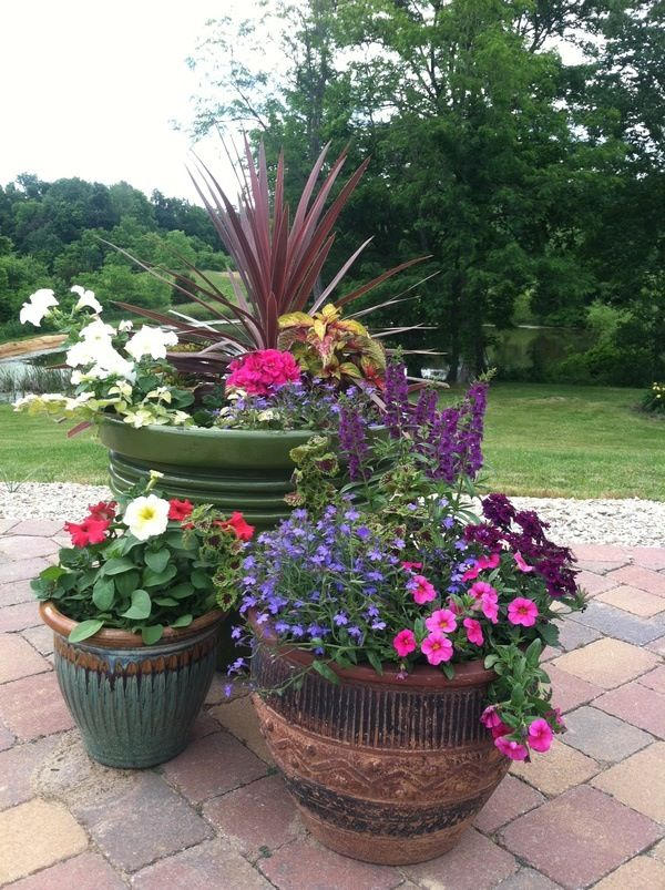 container gardening around the pool