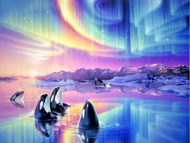 5d Diamond Painting Orcas And Arctic Aurora Kit Orca Orca Art Morning Songs