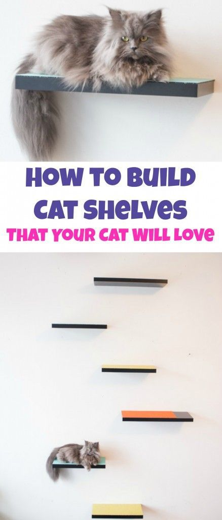 Best Diy Cat Shelves Ideas On Pinterest Cat Wall Shelves - 22 awesome pieces furniture every cat owner will love