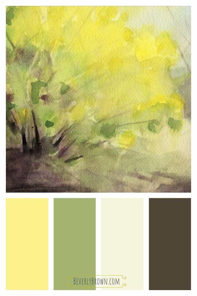 Spring Landscape Pictures Forsythia Magnolia Central Park