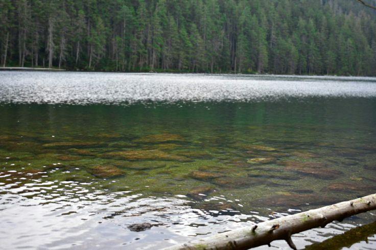 Šumava Jezero Černé jezero Les Podzim