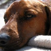 How to Add Vinegar to Water to Stop a Dog's Itching | eHow