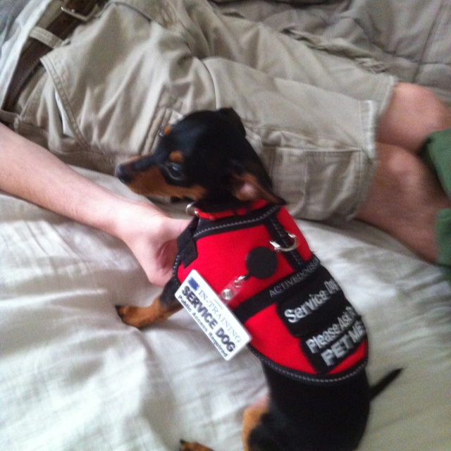Service Dog Vest Mesh with Removable Reflective Patches 8 Colors