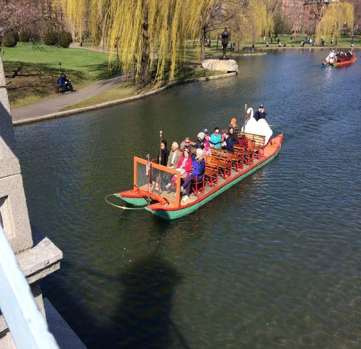 Swan Boats sail again in Boston | Local News  - WCVB Home