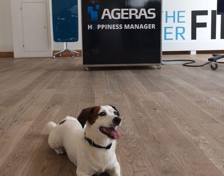Hundesteuer: Alles was man rund um den Vierbeiner und Steuern wissen muss