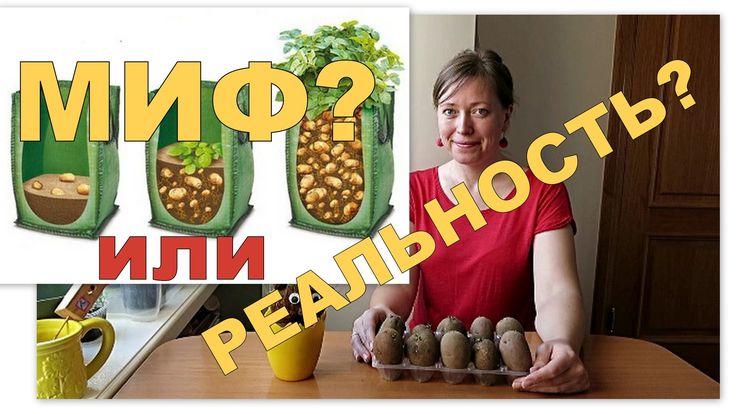 Картошка в мешках - МИФ?! // Выращивание картофеля в мешках / Potatoes i...